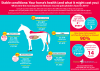 Most expesnsive horse illnesses infographic