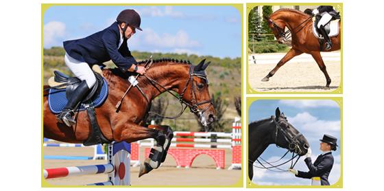 horse-blog-image-28-06-2016